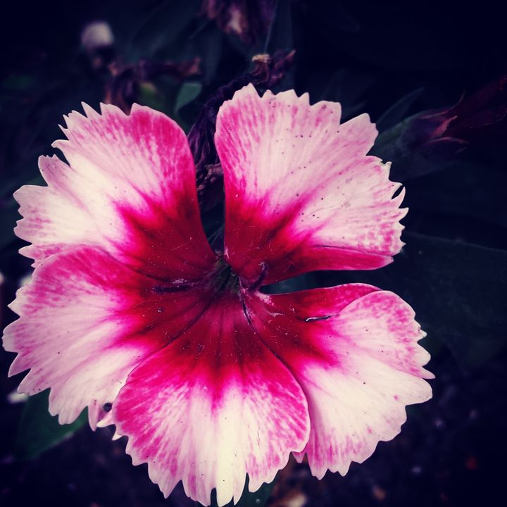 Spring Colors 2 - Amanda Hovseth