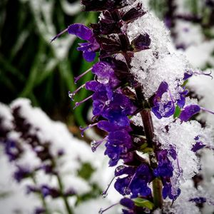Frosted Flowers 2 - Amanda Hovseth