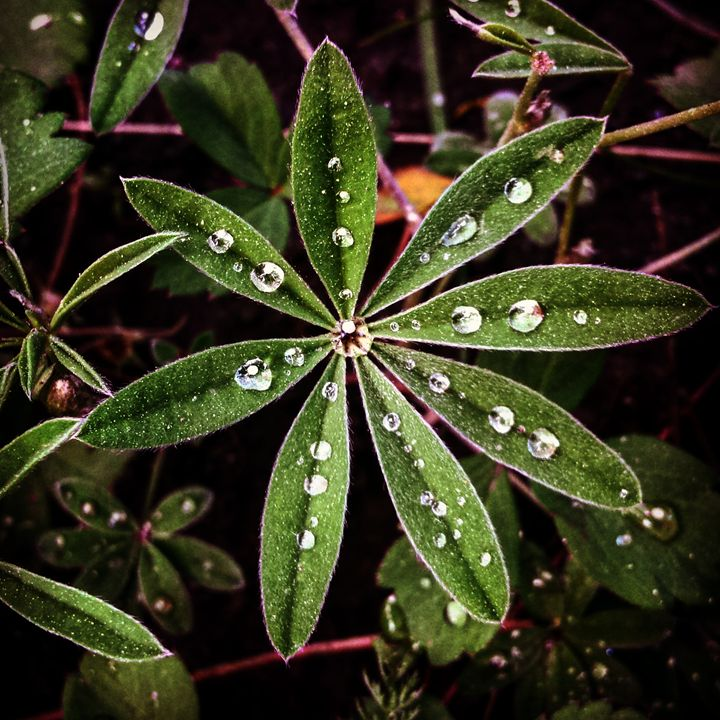 Water Droplets Leaves - Amanda Hovseth