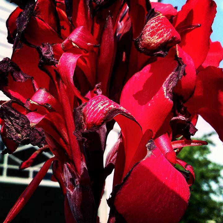 Fiery Red - Amanda Hovseth