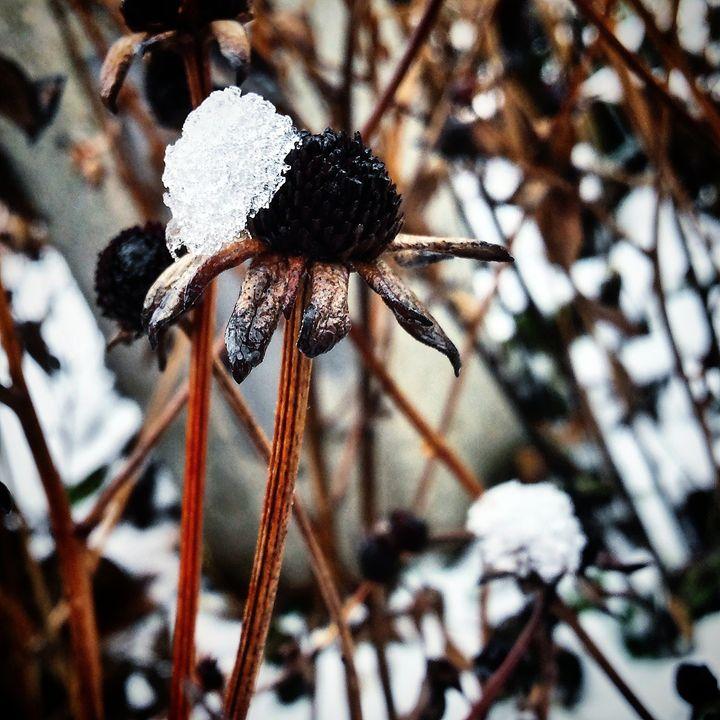 Snow Cap - Amanda Hovseth