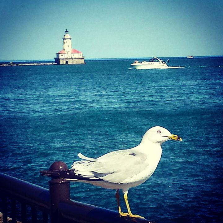 Seagull and Lighthouse - Amanda Hovseth