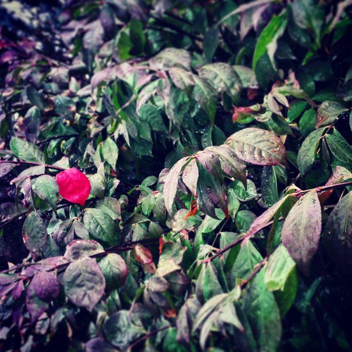 Feeling Lonely? - Amanda Hovseth