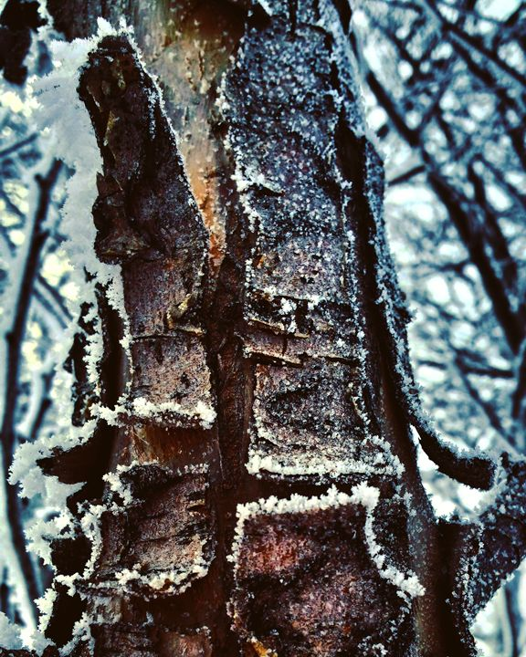 Frozen Bark - Amanda Hovseth
