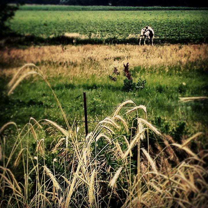 Lone Horse - Amanda Hovseth