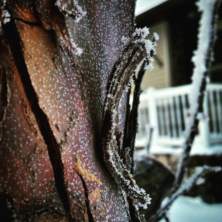 Frozen Bark 2 - Amanda Hovseth
