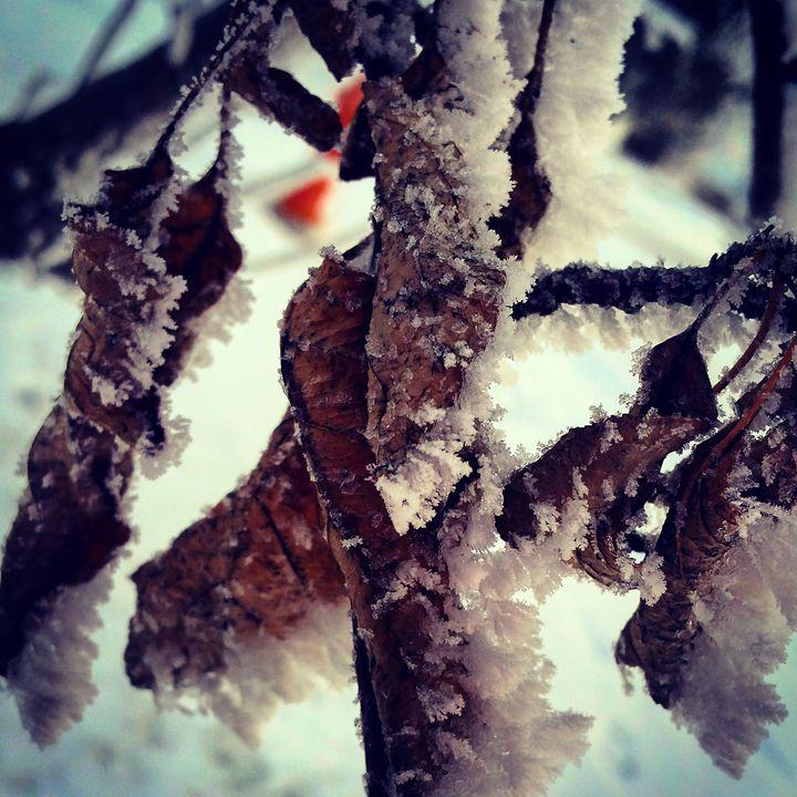 Frosty Leaves - Amanda Hovseth
