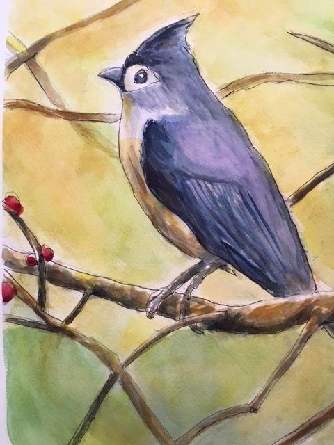 A Blue Jay, watercolor/pen, 1X14 - Winnifred Liang