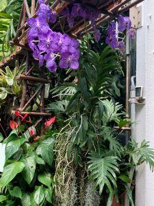 Biltmore Green house plants