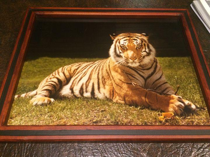 Tiger Photograph - Tigers