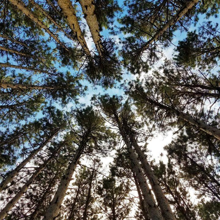 Forest - AcidKat