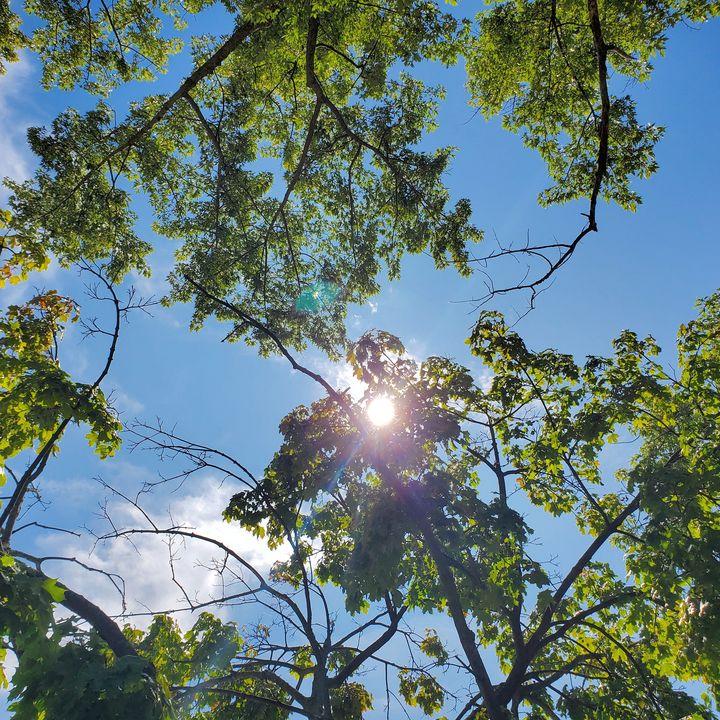 Sunshine Grove - AcidKat