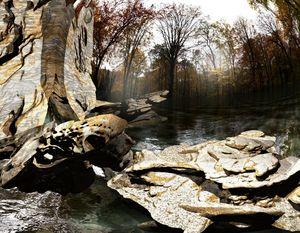Rock Shelf - Steve Kelly aka kellyocs