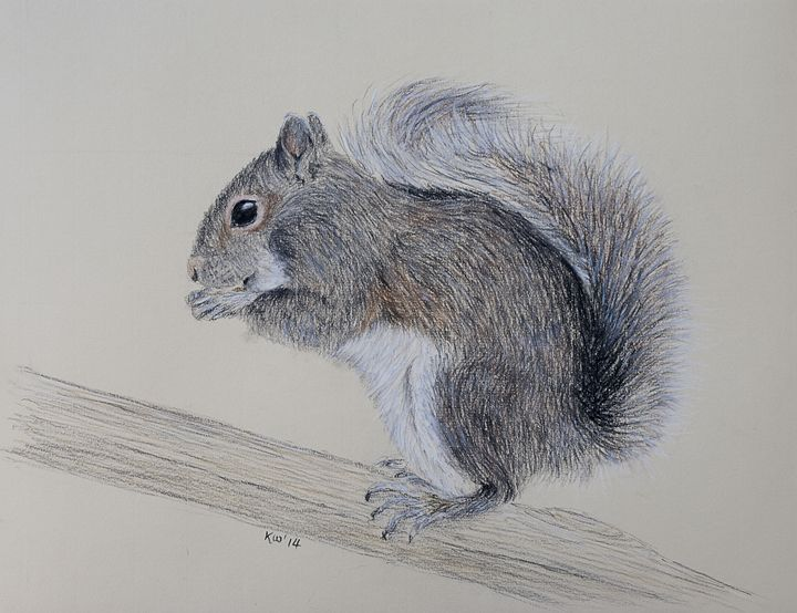 Grey Squirrel - Kate Wilkey Art