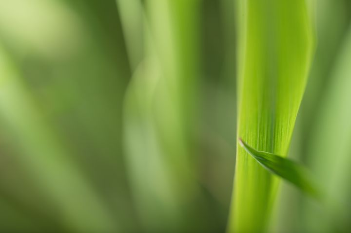 MACRO PLANT LEAVES - PHOTOCLARITY FINE ART PHOTOGRAPHY