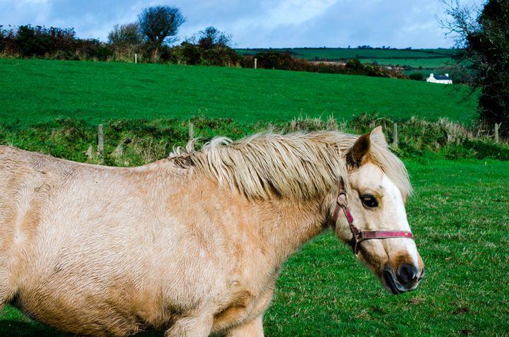 Ireland - Amy Killion