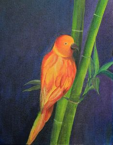 Parrot on bamboo
