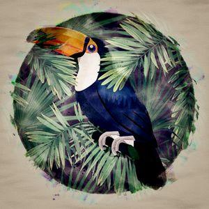 Hornbill_Tropical Bird