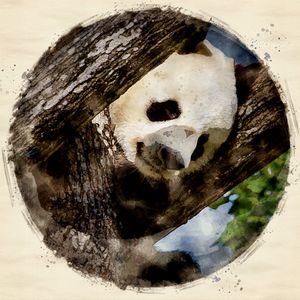 Panda | Digital Art