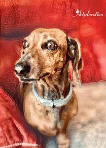 Susanna's dog