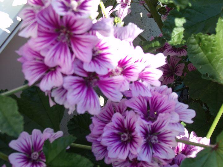 In The Garden .. - myphotography