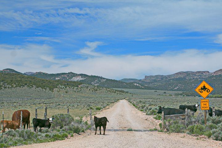 Sharing the Road - Juan's corridor