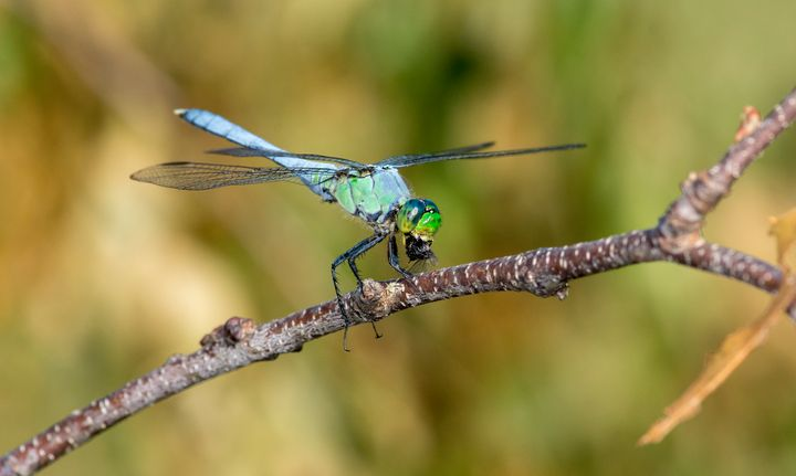 Munch, munch, munch... - Insect Photography