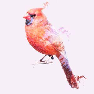 Cardinal - Incendium Design