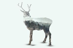 Caribou / Winter