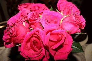 Roses That Give Life