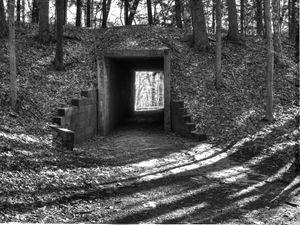 Light Through Forest Tunnel