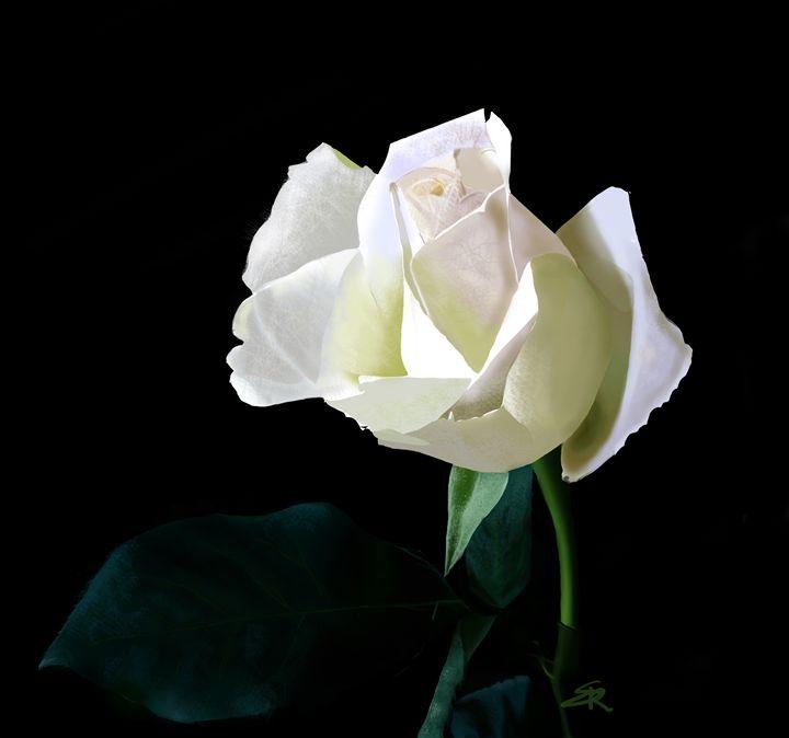 Rose - Reg'Art de Vie