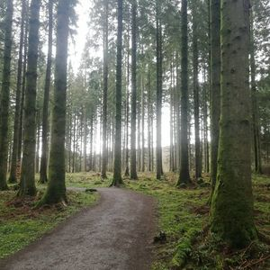 Natures Moss