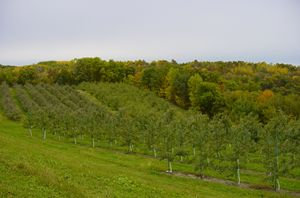 Apple orchard Fall - Gays Mills, WI