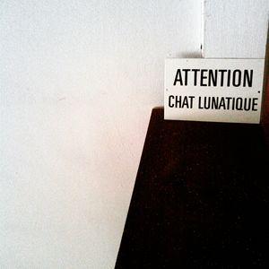 Chat Lunatique
