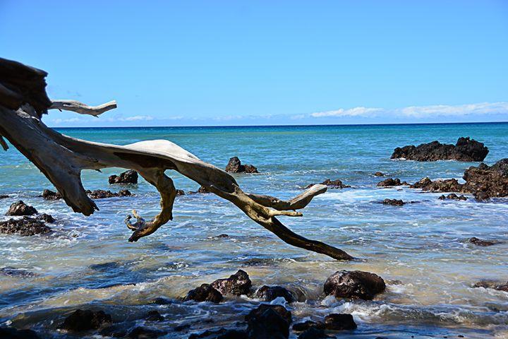 Beach Day - LCB Creative