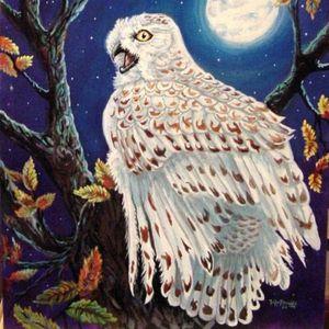 Snowy Owl - Tripp Reynolds