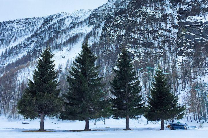 Italy / Piedmont - The 4 Trees - Wanderlust
