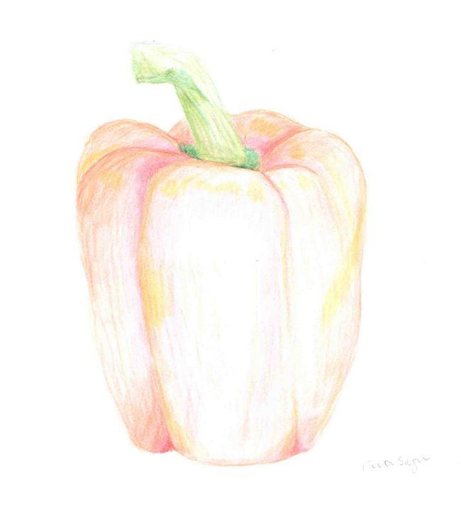 Paprika pencil drawing - Fiona Singer