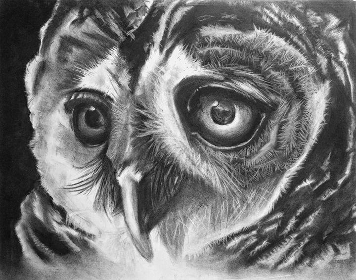 Owl Gaze - Josh Emanuel