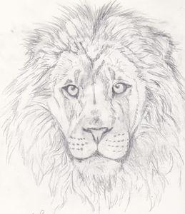 The Lion isn't Sleeping Tonight