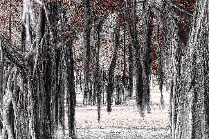 Hanging Moss - tom prendergast fine art images