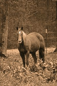 Horse in a Field {Sepia}