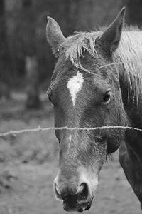 Horse Face {B&W}