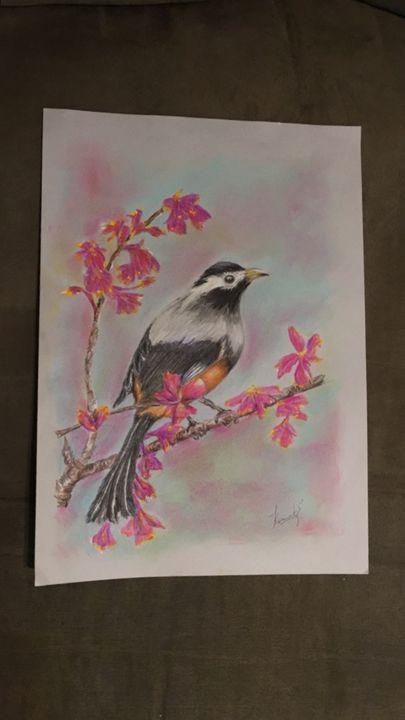 The bird - Komal