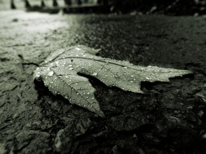 Rain - JGoodrell