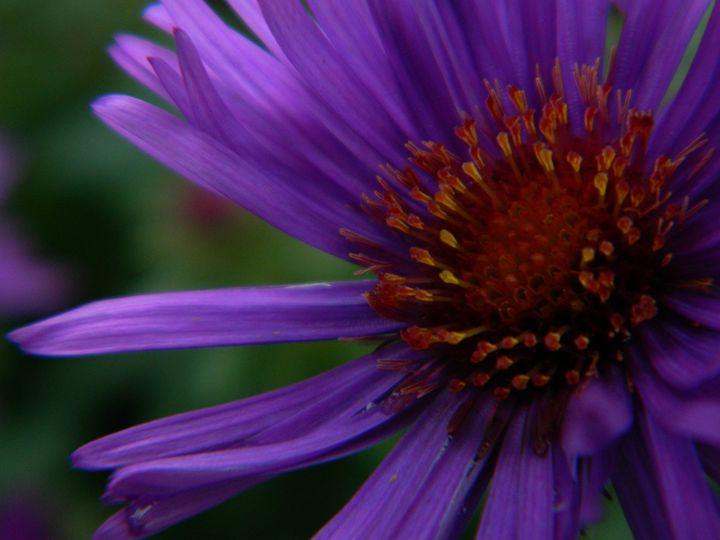 Purple Petals - JGoodrell