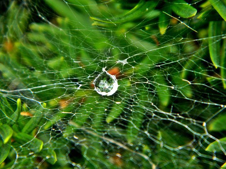 Water Web - JGoodrell
