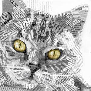 Silver Tabby Misty Cat