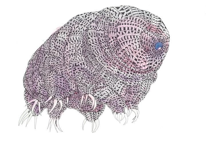 water bear - Ben Roback's Art